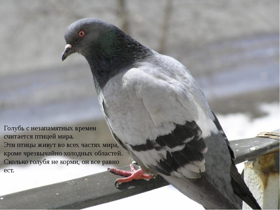 Я птица мирная, Хоть и бесквартирная. Гнёзда строить не мастак, Полечу я на...