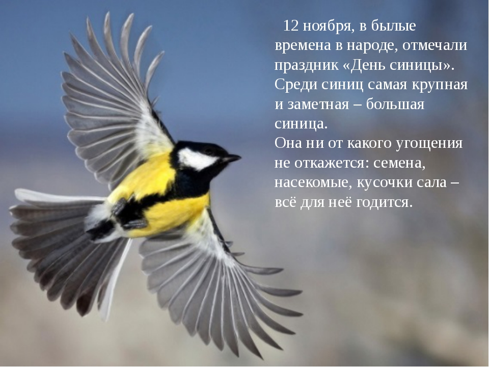 Вот прилетела невеличка Желтогруденькая птичка. Ест она сало и пшеничку А зо...