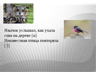 Язычок услышал, как ухала сова на дереве [u] Неизвестная птица повторяла [ʌ]