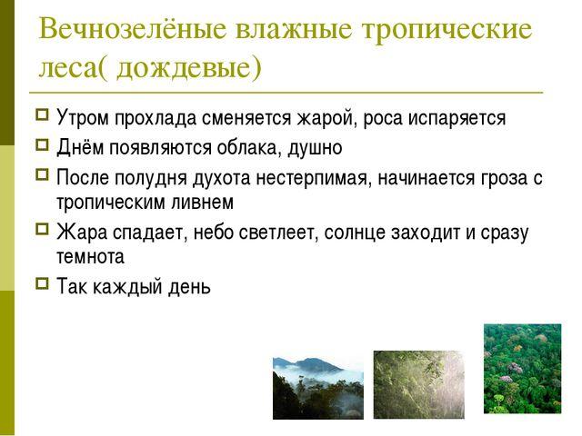 Вечнозелёные влажные тропические леса( дождевые) Утром прохлада сменяется жар...