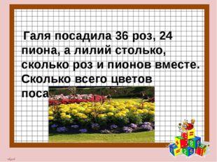 Галя посадила 36 роз, 24 пиона, а лилий столько, сколько роз и пионов вместе