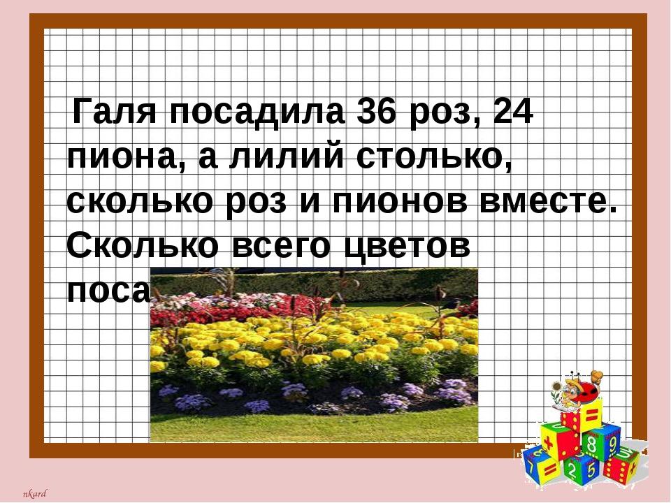 Галя посадила 36 роз, 24 пиона, а лилий столько, сколько роз и пионов вместе...
