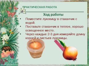 ПРАКТИЧЕСКАЯ РАБОТА Поместите луковицу в стаканчик с водой. Поставьте стакан