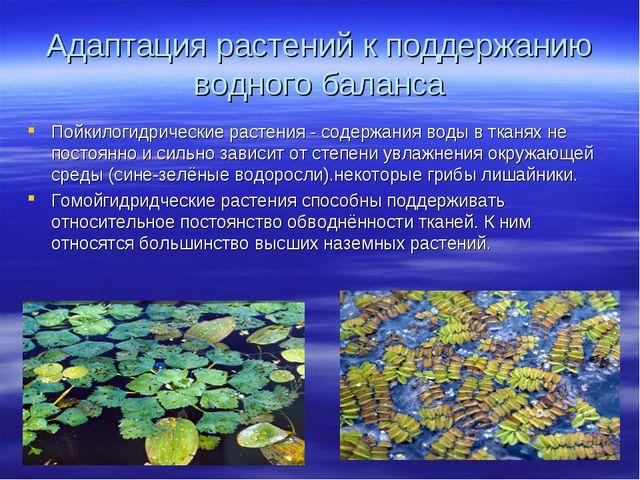 Адаптация растений к поддержанию водного баланса Пойкилогидрические растения...
