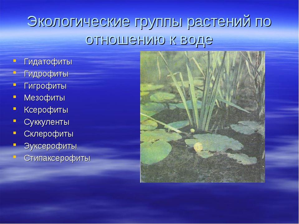 Экологические группы растений по отношению к воде Гидатофиты Гидрофиты Гигроф...