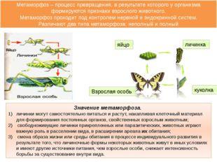 Значение метаморфоза. личинки могут самостоятельно питаться и растут, накапли
