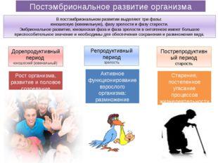 Постэмбриональное развитие организма Дорепродуктивный период юношеский (ювена