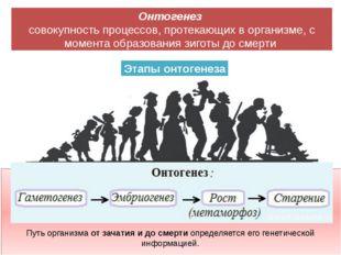 Этапы онтогенеза Онтогенез совокупность процессов, протекающих в организме,