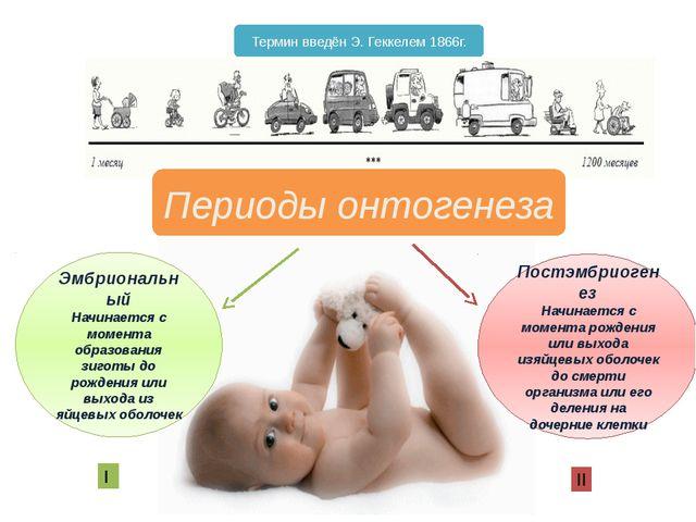 Периоды онтогенеза Эмбриональный Начинается с момента образования зиготы до р...