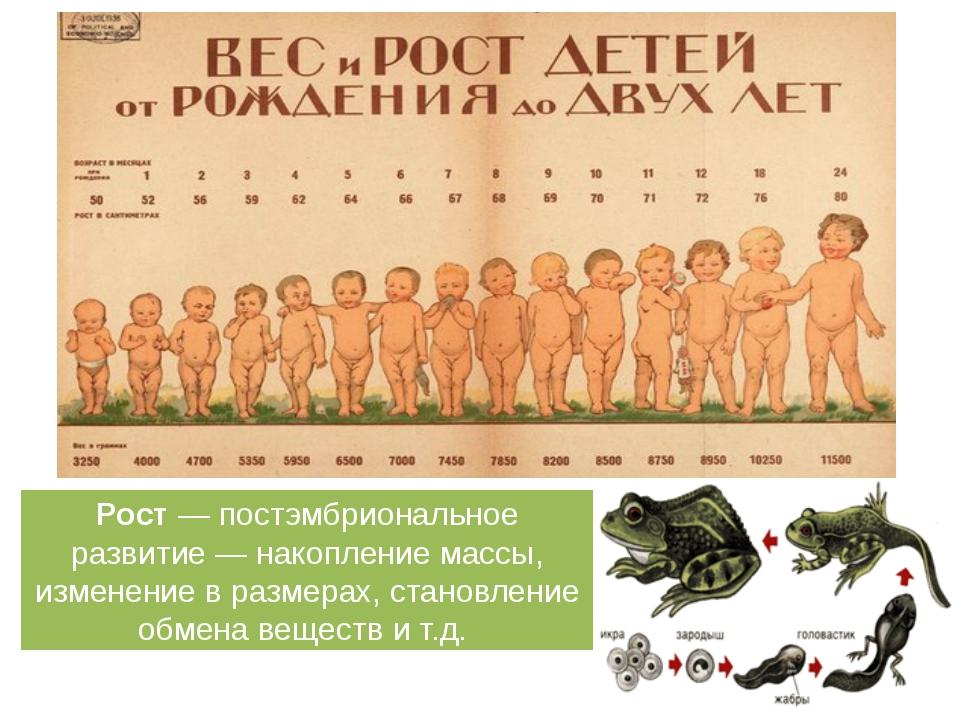 Рост — постэмбриональное развитие — накопление массы, изменение в размерах, с...