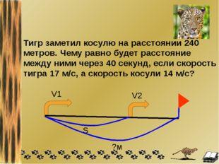 Тигр заметил косулю на расстоянии 240 метров. Чему равно будет расстояние меж