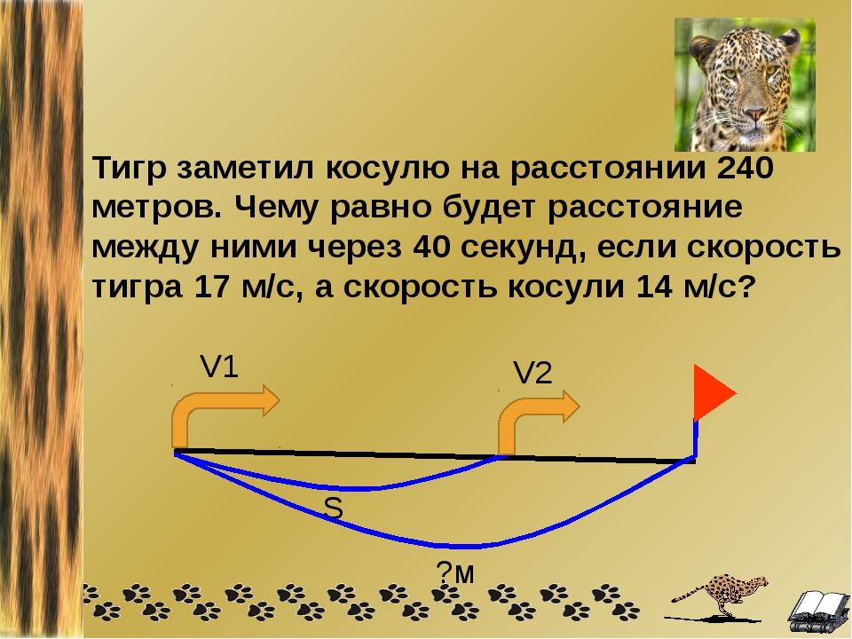Тигр заметил косулю на расстоянии 240 метров. Чему равно будет расстояние меж...