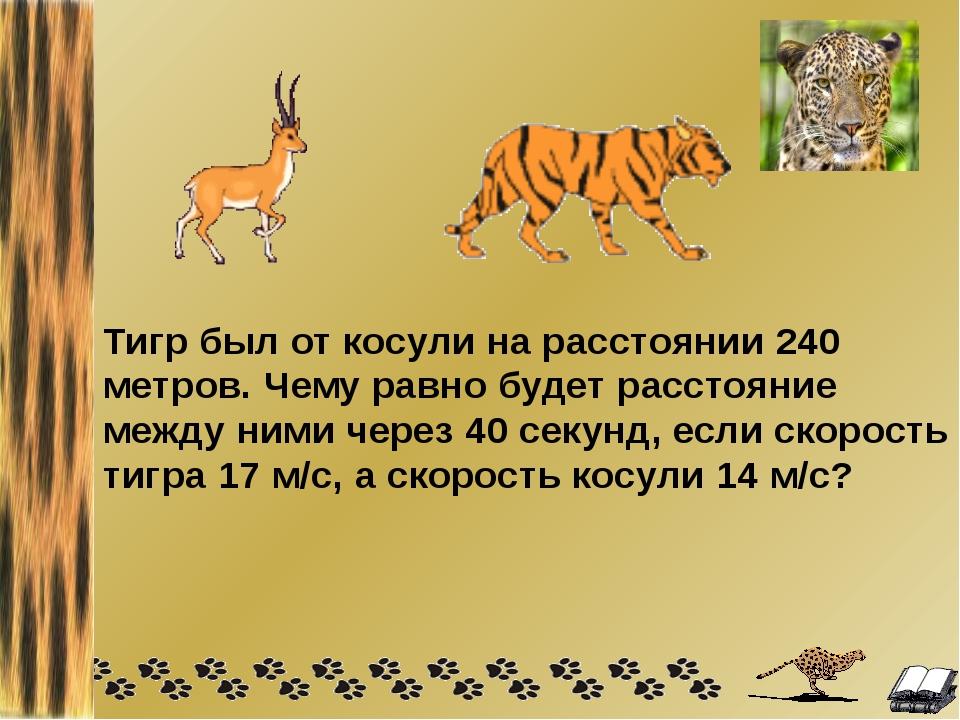 Тигр был от косули на расстоянии 240 метров. Чему равно будет расстояние межд...