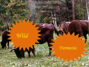 Animals Wild Domestic