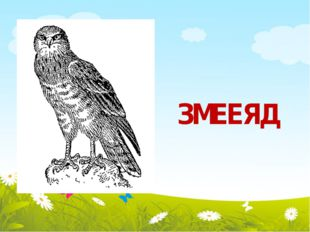 ЗМЕЕЯД