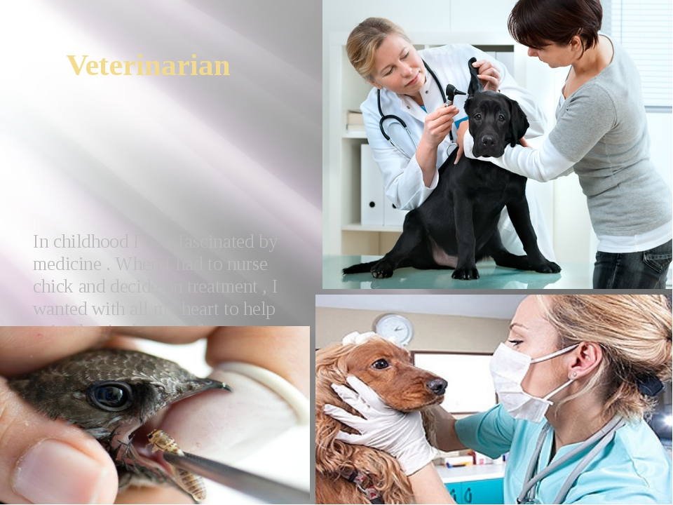 Veterinarian In childhood I was fascinated by medicine . When I had to nurse...