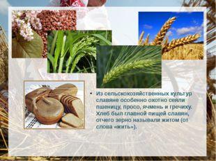 Из сельскохозяйственных культур славяне особенно охотно сеяли пшеницу, про