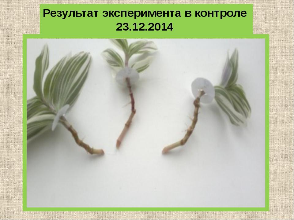 Результат эксперимента в контроле 23.12.2014