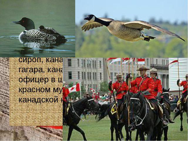 Символы Канады Уникально канадскими символами являютсякленовыйлист икленов...