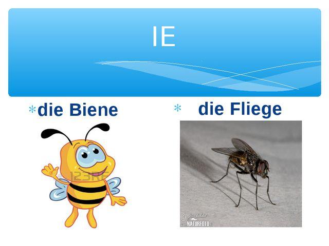 IE die Biene die Fliege