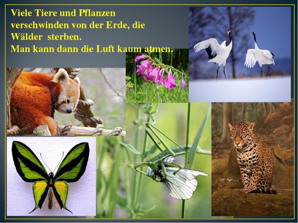 Viele Tiere und Pflanzen verschwinden von der Erde, die Wälder sterben. Man k...