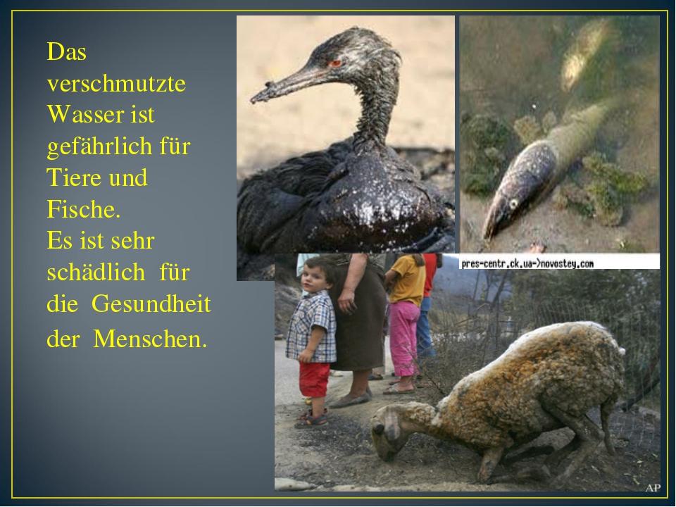 Das verschmutzte Wasser ist gefährlich für Tiere und Fische. Es ist sehr schä...