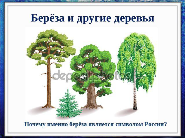 Берёза и другие деревья Почему именно берёза является символом России?