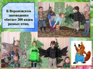 В Воронежском заповеднике обитает 200 видов разных птиц.