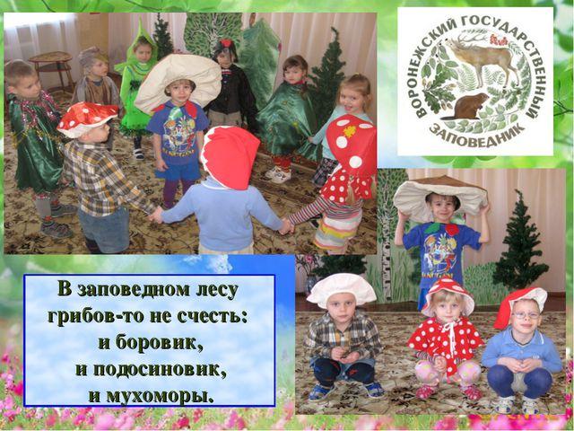 В заповедном лесу грибов-то не счесть: и боровик, и подосиновик, и мухоморы.