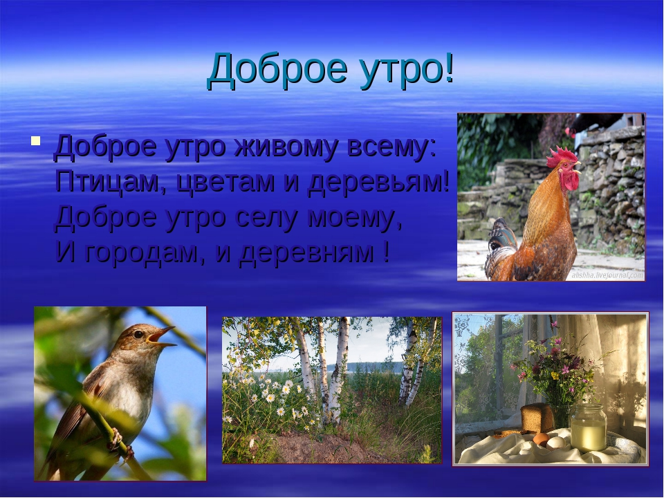 Доброе утро! Доброе утро живому всему: Птицам, цветам и деревьям! Доброе утро...