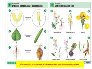 Ботаника 2. Строение и систематика цветковых растений.