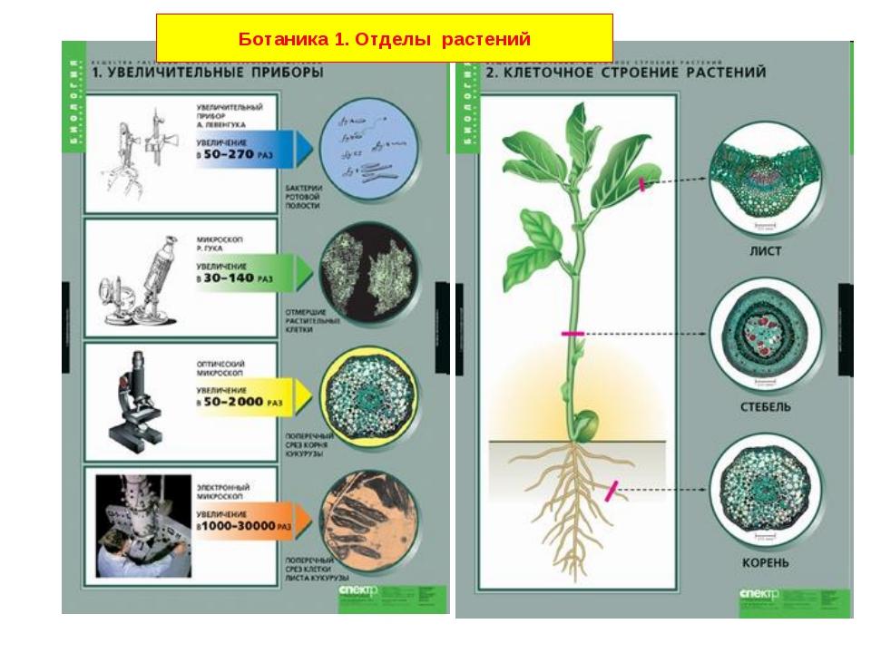Ботаника 1. Отделы растений