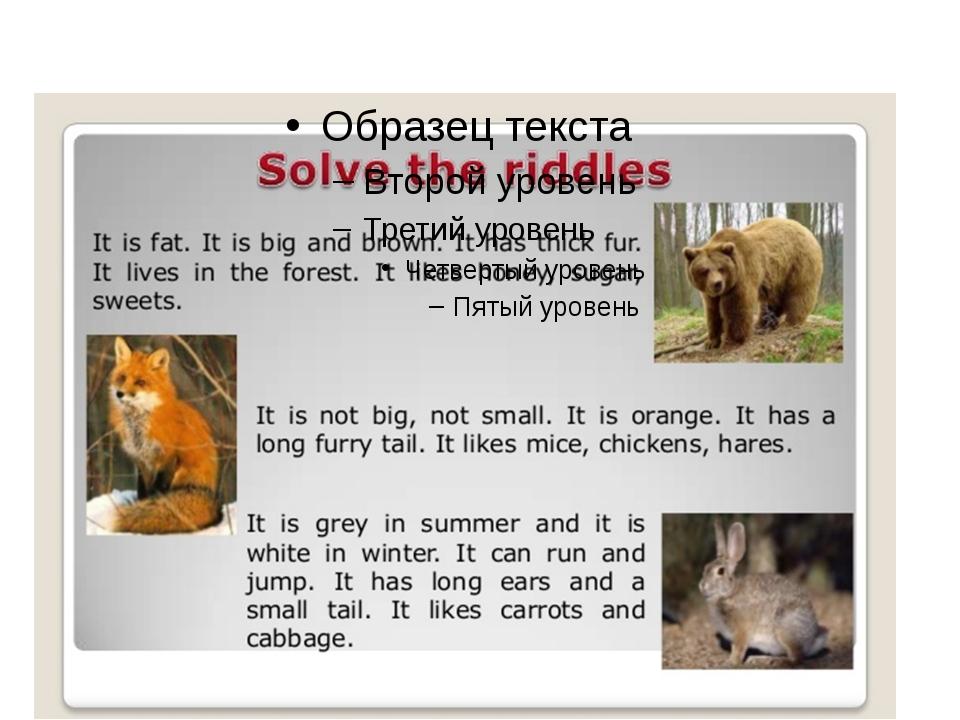 Описание картинки с животными на английском