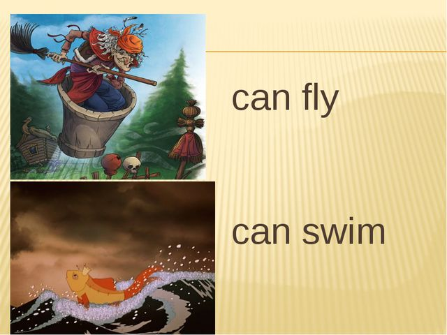 can fly can swim