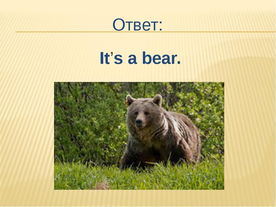 Ответ: It's a bear.
