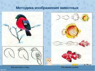 Методика изображения животных Как рисовать птиц. Рисование рыбки.