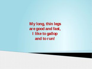 My long, thin legs are good and fast, I like to gallop and to run!