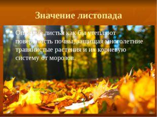 Значение листопада Опавшие листья как бы утепляют поверхность почвы, защищая