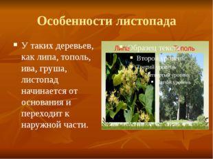 У таких деревьев, как липа, тополь, ива, груша, листопад начинается от основа