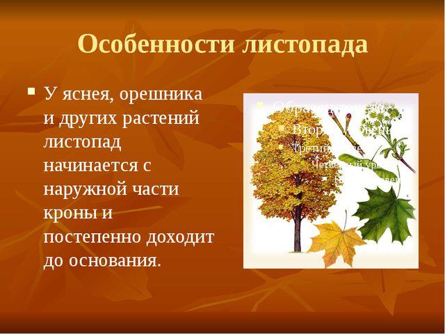 Особенности листопада У яснея, орешника и других растений листопад начинается...