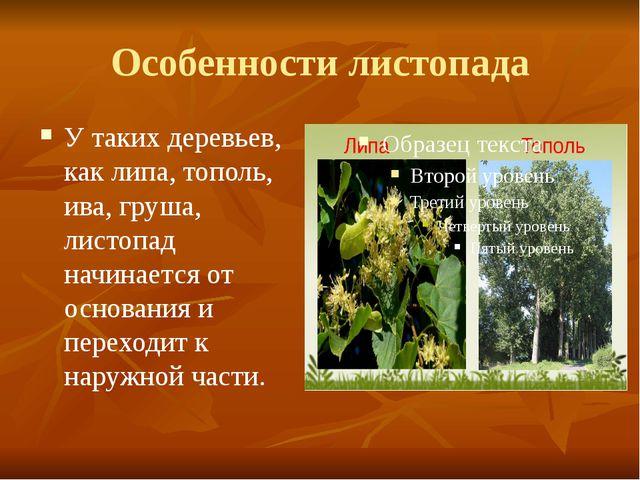 У таких деревьев, как липа, тополь, ива, груша, листопад начинается от основа...
