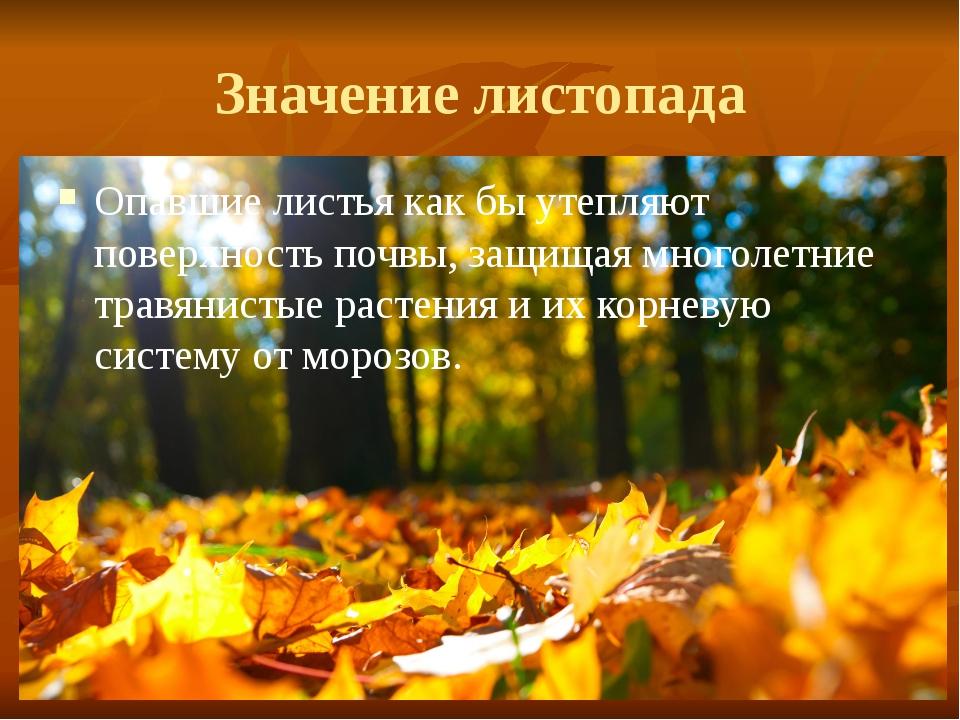 Значение листопада Опавшие листья как бы утепляют поверхность почвы, защищая...