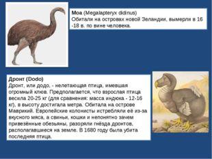 Моа (Megalapteryx didinus) Обитали на островах новой Зеландии, вымерли в 16 -