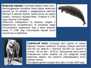 Морская корова Стеллера (Steller's Sea Cow) Малоподвижное беззубое темно-буро