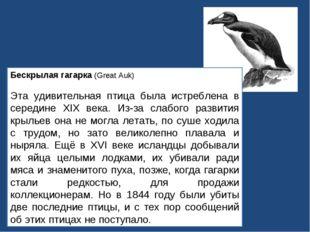 Бескрылая гагарка (Great Auk) Эта удивительная птица была истреблена в середи