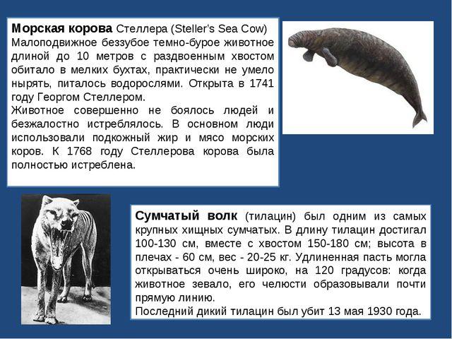 Морская корова Стеллера (Steller's Sea Cow) Малоподвижное беззубое темно-буро...