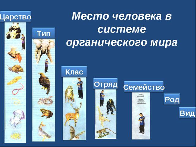 Место человека в системе органического мира