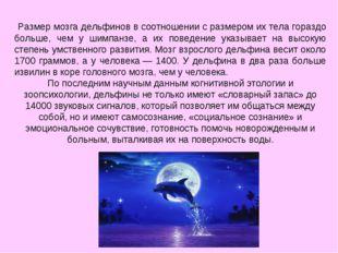 Размер мозга дельфинов в соотношении с размером их тела гораздо больше, чем