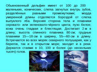 Обыкновенный дельфин имеет от 100 до 200 маленьких, конических, слегка загнут