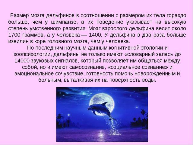 Размер мозга дельфинов в соотношении с размером их тела гораздо больше, чем...